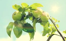 Обои листья, солнце, свет, ветки, природа, блики, дерево