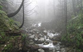 Обои лес, трава, деревья, фото, туман, ручей, камни