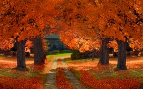 Обои листья, осень, сарай, деревья, путь, солнечные тени