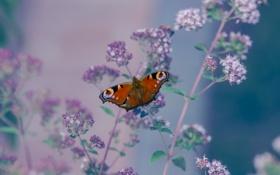 Картинка цветы, стебли, крылья, моль