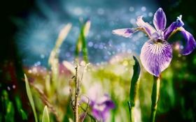 Обои цветок, трава, макро, цветы, природа, листки, nature