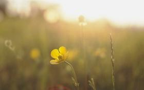 Обои цветок, природа, свет