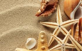 Картинка песок, лето, ракушки, морские звезды