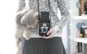Обои девушка, фон, обои, настроения, собака, фотоаппарат, собачка
