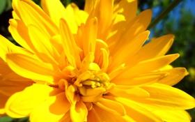 Картинка зелень, цветок, трава, солнце, желтый, яркий