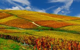 Обои осень, небо, поля, вноградники