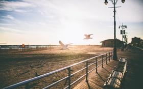 Картинка пляж, солнце, закат, улица, чайки, тени, скамейки