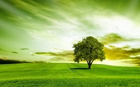 Обои зелень, поле, природа, дерево, grass, травка, field