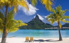 Обои пляж, пальмы, гора