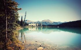 Обои лес, озеро, курорт