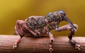 Картинка природа, фон, жук