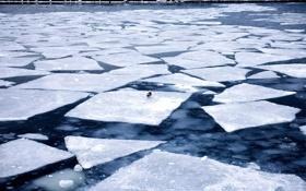 Обои лед, вода, птица