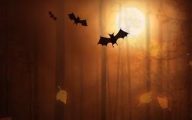 Обои лес, Хэллоуин, летучие мыши, forest, halloween, bats, жуткий