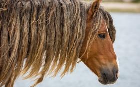 Обои морда, конь, лошадь, голова, прическа, грива, профиль