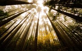 Картинка осень, свет, деревья, природа, стволы, листва, Лес