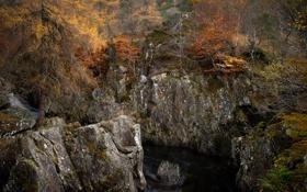 Картинка осень, лес, деревья, природа, скалы