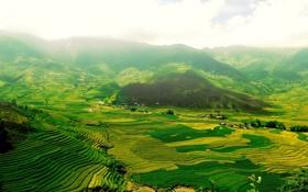 Обои долина, ступени, поля