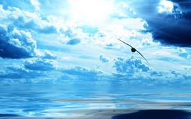 Картинка небо, вода, облака, птицы, горизонт, полёт