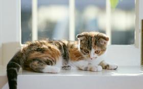 Картинка окно, котёнок, полосатый