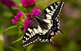 Картинка цветок, крупный план, бабочка