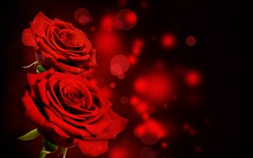 Обои розы, red, black, flowers, roses