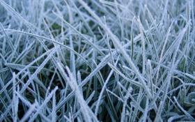 Картинка иней, трава, заморозок