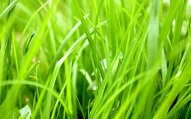 Обои трава, растение, сочный, зелень, тепло, сезон, зелёный