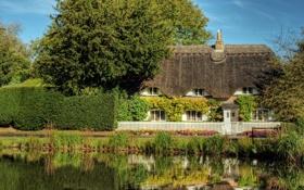 Картинка трава, деревья, дом, пруд, камыши, забор, сад