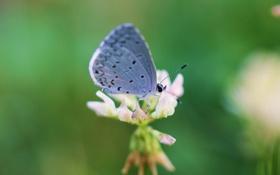 Обои цветок, насекомое, макро, бабочка