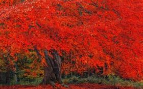 Обои осень, крона, листва, дерево