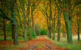Обои осень, листья, деревья, парк, дорожка, аллея