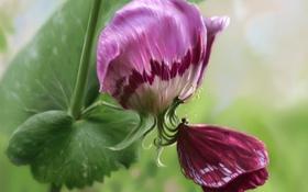 Обои розовый, цветок, растение, бабочка, арт, крылья, лепестки