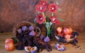 Обои фрукты, нектарин, мальвы, натюрморт, ягоды, инжир, ваза