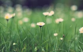 Картинка зелень, трава, макро, природа, green, поляна, растения