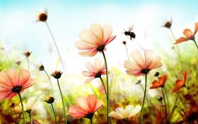 Картинка весна, пчела, лепестки, шмель, spring, flowers, цветы