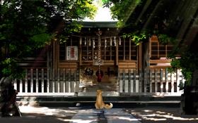 Картинка лучи, деревья, лиса, Храм