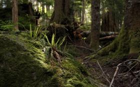 Обои лес, мох, папоротник