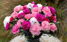 Обои гвоздики, цветок, букет, цветы
