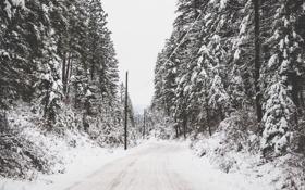 Картинка зима, дорога, деревья, провода
