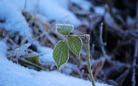 Обои зима, снег, природа, листочки, веточки