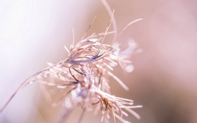 Картинка трава, макро, фон