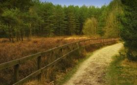 Картинка дорога, лес, ограда, сосны