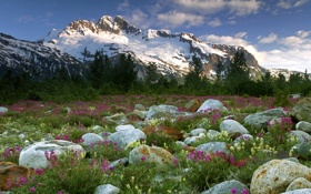 Картинка лес, горы, Canada, камни, цветы