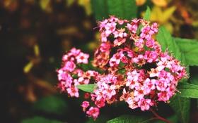 Обои розовый, красиво, тепло, макро, размытость