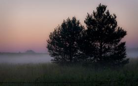 Картинка природа, пейзаж, поле, ночь, туман