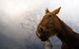 Обои smile, horse, Lighthouse Dreamer