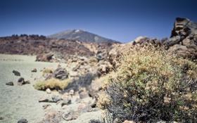 Обои камни, трава, куст, растение, скалы, природа, макро