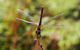 Обои крылья, стрекоза, насекомое, крылышки