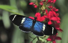 Обои цветок, макро, бабочка