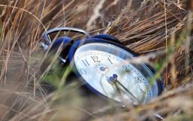 Обои трава, время, часы